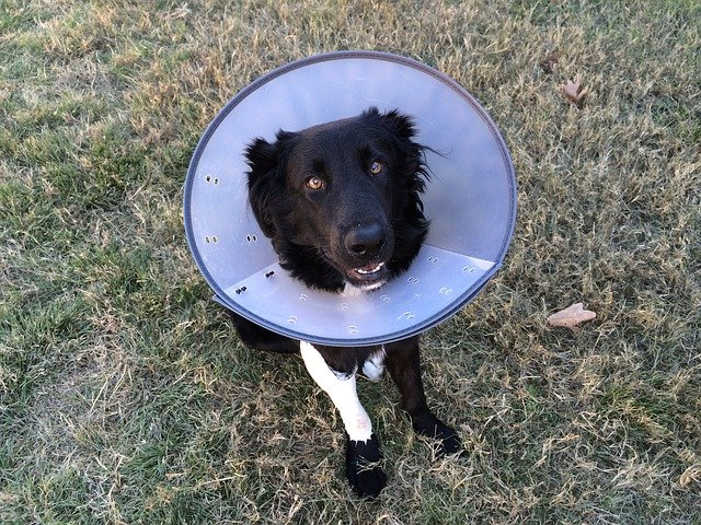 Top 5 Ways to Care for Your Dog After Surgery – Aftercare Tips