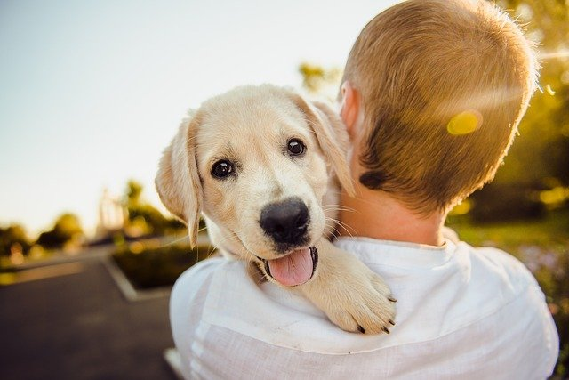13 Reasons Why Dogs Are Man's Best Friend