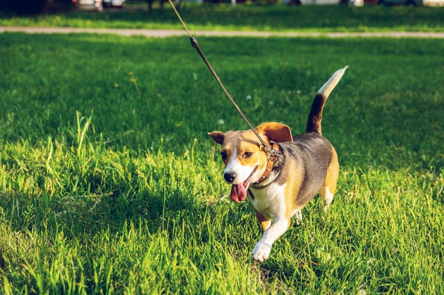 What is the Best Way to Exercise My Dog?